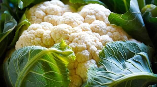 Почему нужно начать есть цветную капусту: полезные свойства овоща