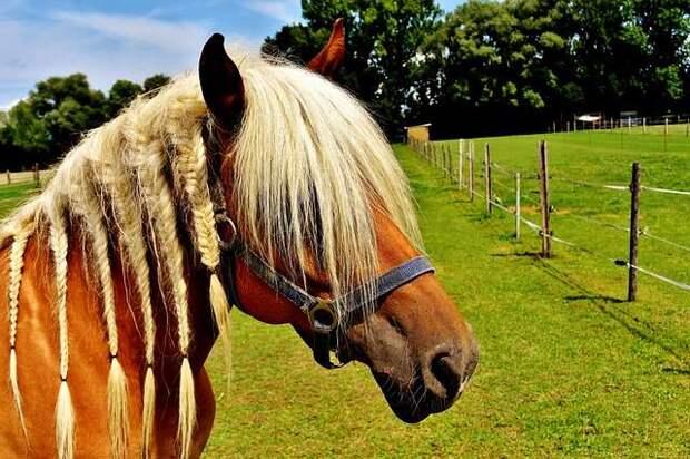 Странная история о косичках в гривах лошадях и Человеке в Черном из Украины
