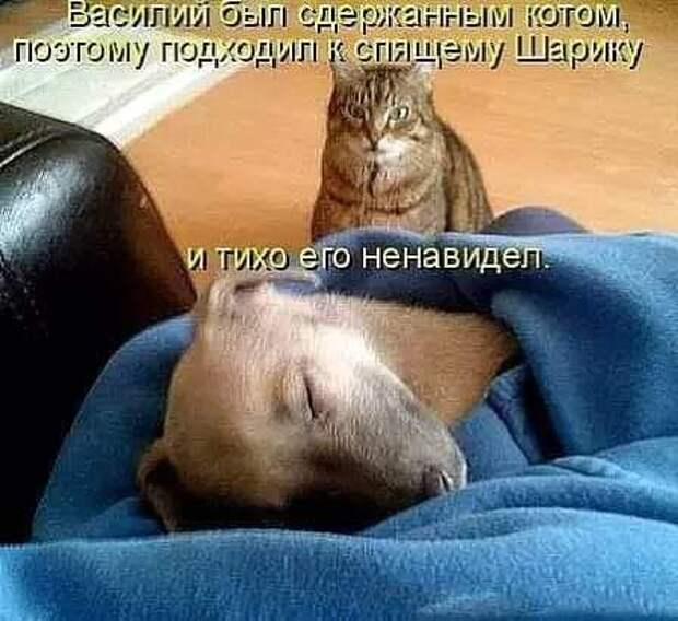 Возможно, это изображение (собака, кот и текст «василий был сдержанным котом, поэтому подходил K спящему шарику и тихо его ненавидел.»)