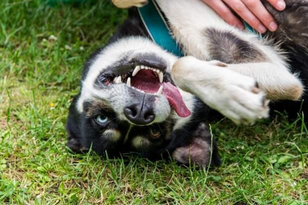 Центр культуры на Ленинградке подготовил видеоролик ко Дню защиты животных