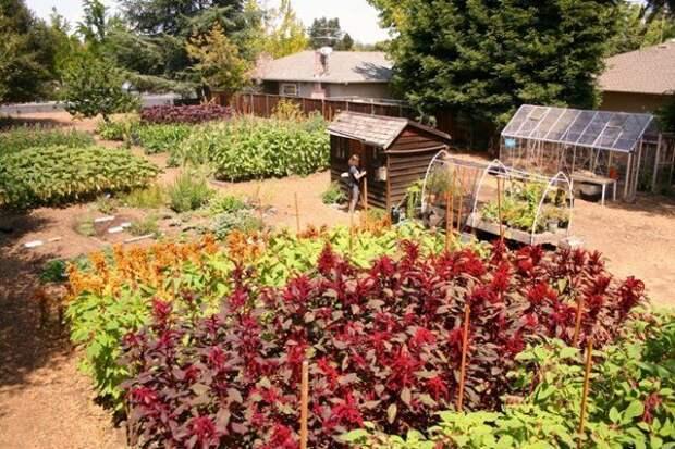 Заготовка компоста должна проводиться регулярно