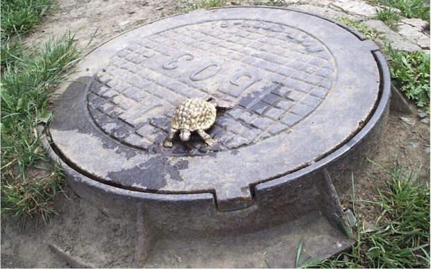 Самые маленькие памятники мира