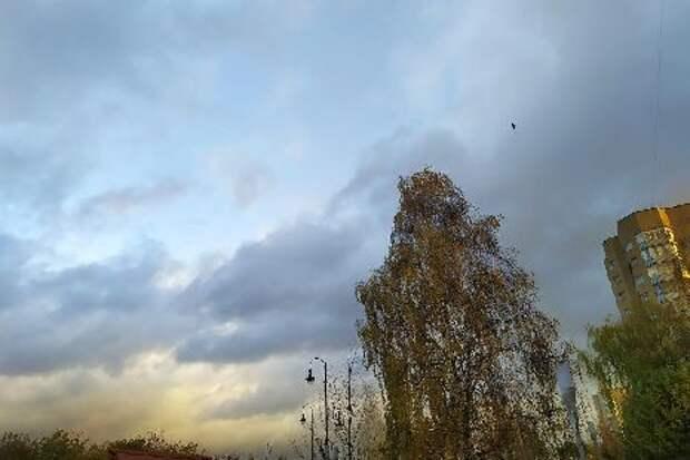 В Тамбовской области прогнозируется усиление ветра