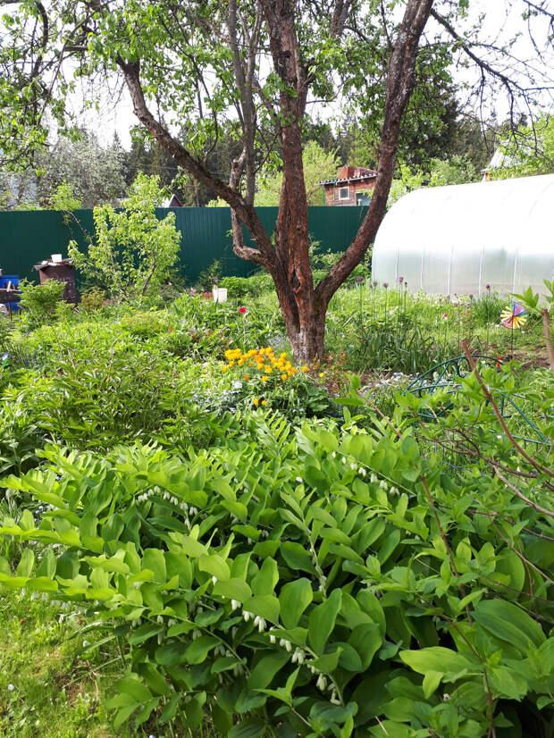 Нужен ли огород дачнику?    Размышления дачницы с 30-летним стажем!