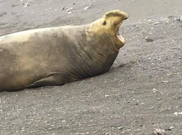 10 смешных снимков диких животных, которые не отличились фотогеничностью