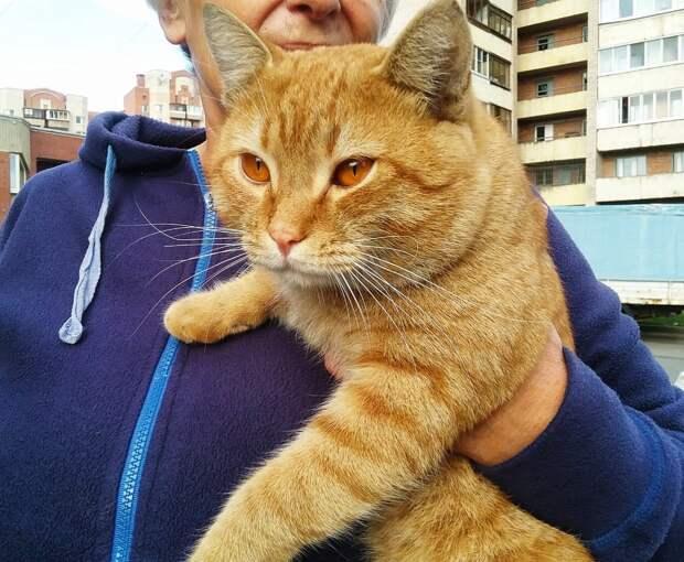 Сейчас выход только один - ручного кота вернуть обратно на улицу, где он продержится всего несколько дней... Умоляем, помогите солнышку!