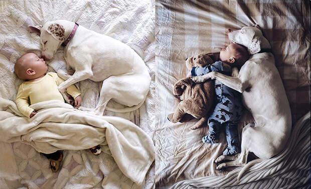 17 милейших фотографий, которые доказывают, что ребёнку просто необходима собака
