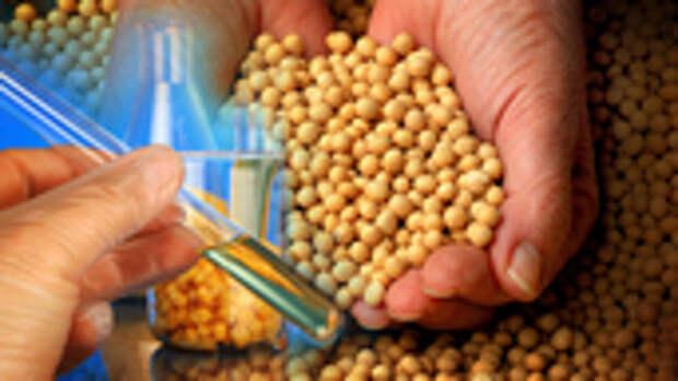 Может вызывать рак: чем опасны ГМО