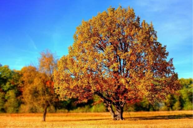 В парке «Покровское-Стрешнево» отметят юбилей памятника природы «Долина реки Химки»