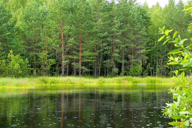 Леса Ленинградской области. Источник фото: https://www.1zoom.ru/Природа/