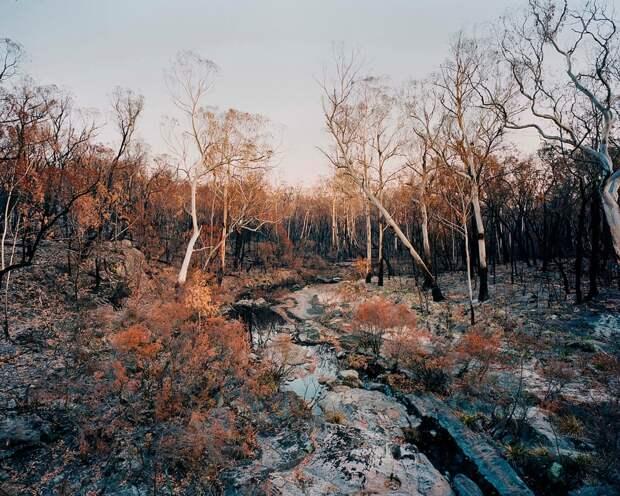 Травмированный пейзаж: Австралия  в фотографиях после лесных пожаров