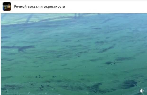 Изумрудный цвет каналу им. Москвы придали согревшиеся водоросли