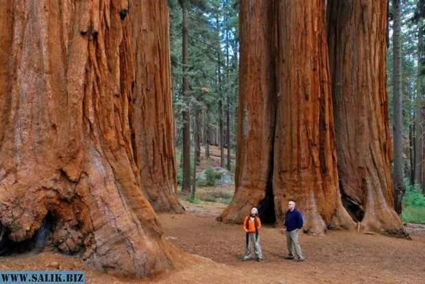 Что не так с лесами нашей планеты?