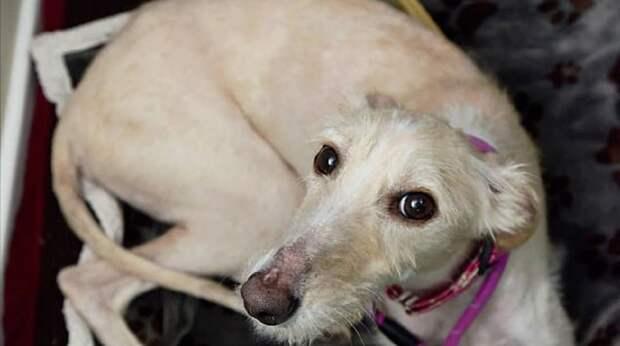 Истощенная собака была похожа на скелет, и только обильное питание могло спасти ей жизнь