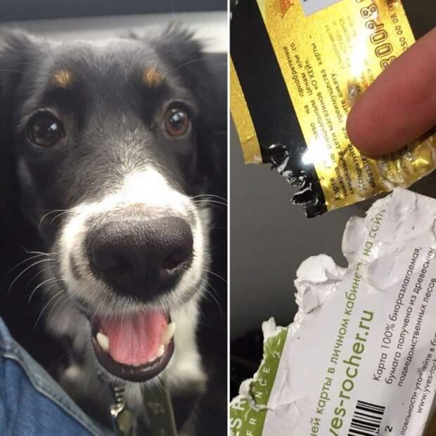 Водитель даже не остановился, чтобы помочь сбитому им беспомощному щенку авария, домашняя собака, сбитый щенок, щенок