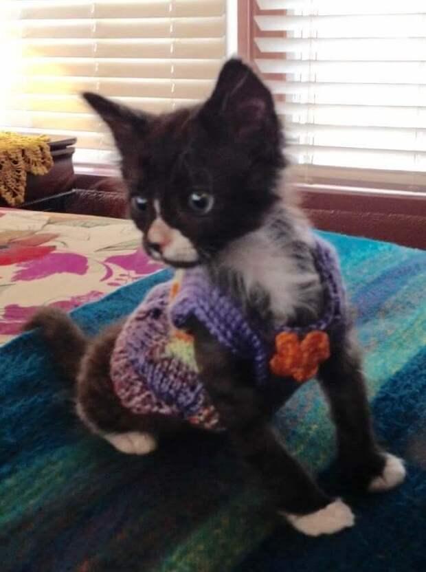 Никто не верил, что он выживет, но котенок оказался настоящим борцом
