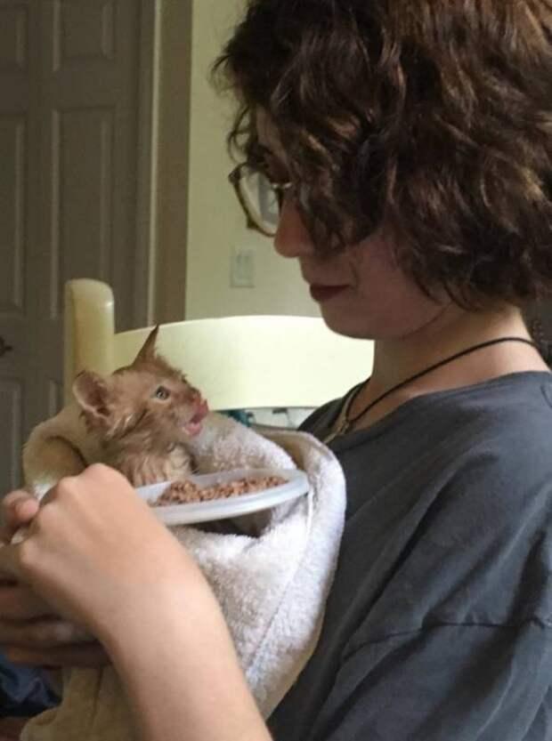 В штате Нью-Йорк девушка спасла котенка из ливневого стока