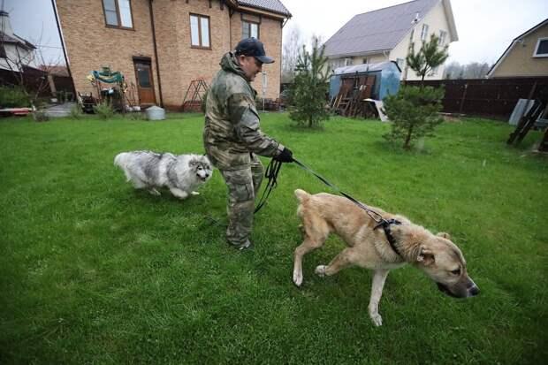 Кто гонит породистых собак на улицу и кто их спасает