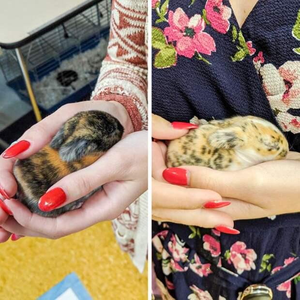 Крошки из мира животных, которых хочется прижать к груди
