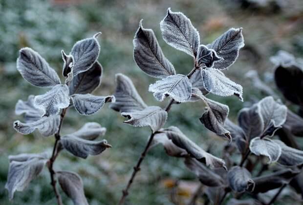 Орловчан предупредили об аномальных заморозках