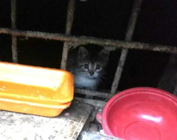 Эти котята сейчас погибают на улице. Просим вас, отзовитесь, помогите! Нужна любая помощь!