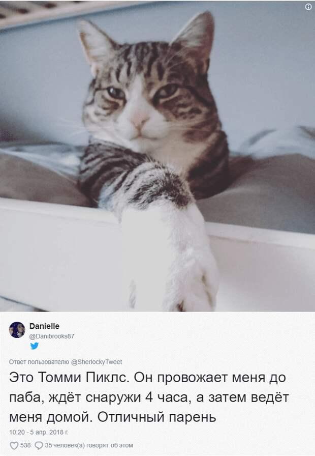 «Хозяин, ты ли это?» Случайная встреча МУРлыки и владельца восхитила интернет-пользователей!