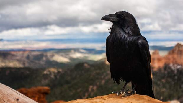Шаман расшифровала появление черного ворона на месте встречи Байдена и Путина