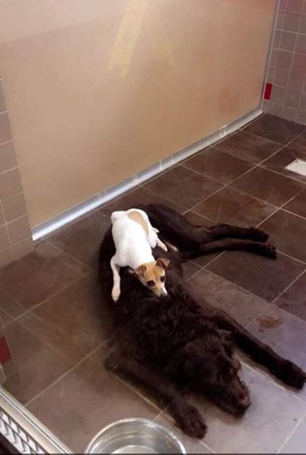 Две бездомные собаки не отходили друг от друга ни на шаг. Поэтому приют нарушил правила