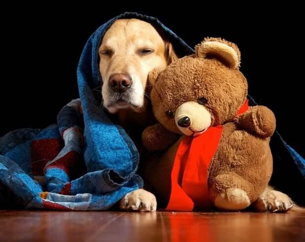 Радость для любимца: выбираем игрушку для собачки!