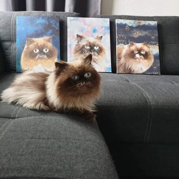 7 угарных фото кота, который похож на вампира
