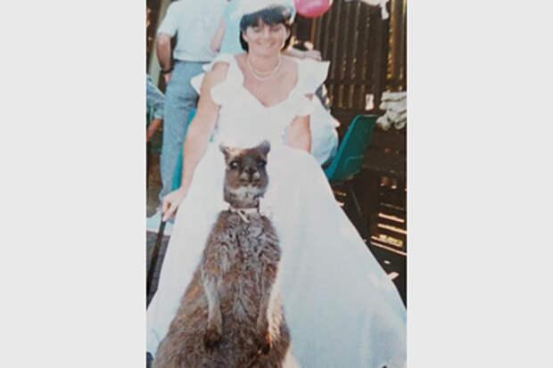 Кенгуру стал шафером на свадьбе