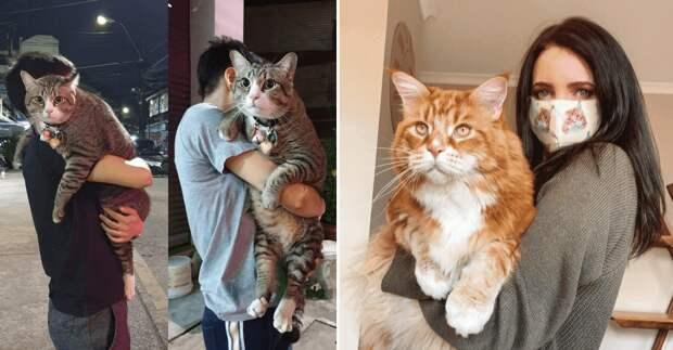13 котов, которые начали расти, но забыли остановиться