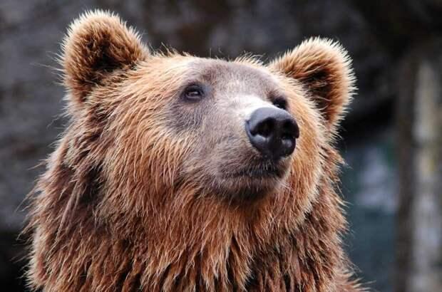 Потерянную в снегах камеру нашел медведь и записал собственное видео