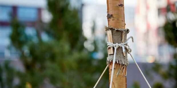 Подать заявку на высадку именного дерева в Москве можно до 15 июня