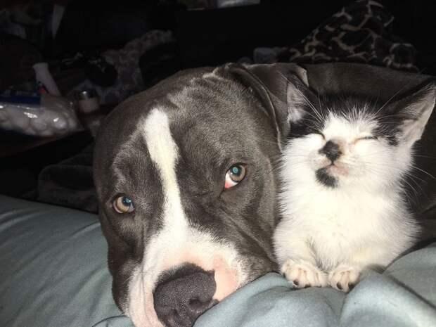 Эти не совсем обычные котенок и собака становятся лучшими друзьями