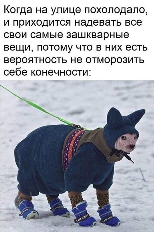 Забавные зверюшки)