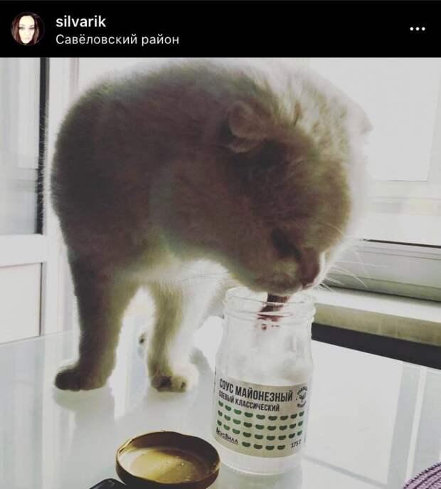 Фото дня: «легкий» завтрак кошки в Савеловском
