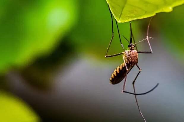 Как избавиться от комаров на даче без использования химикатов