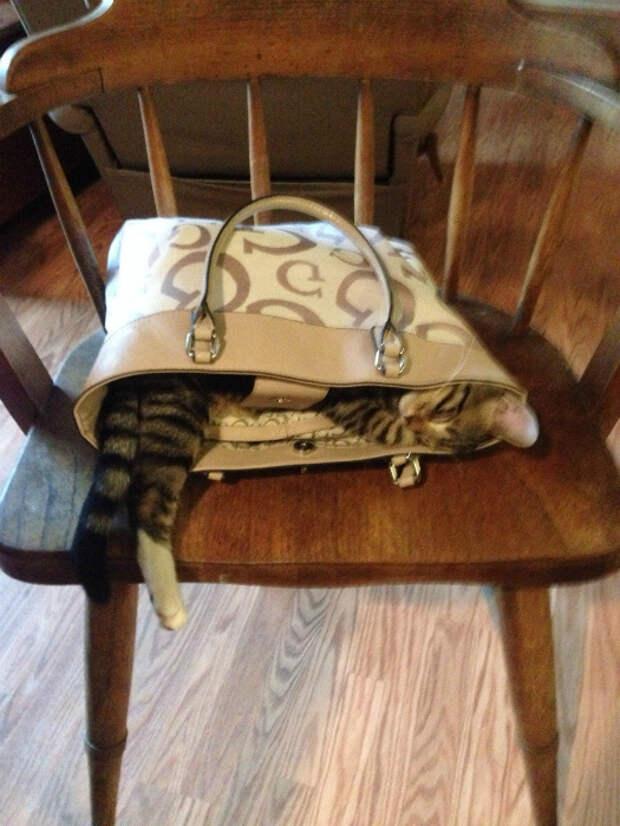 Кот в сумочке.