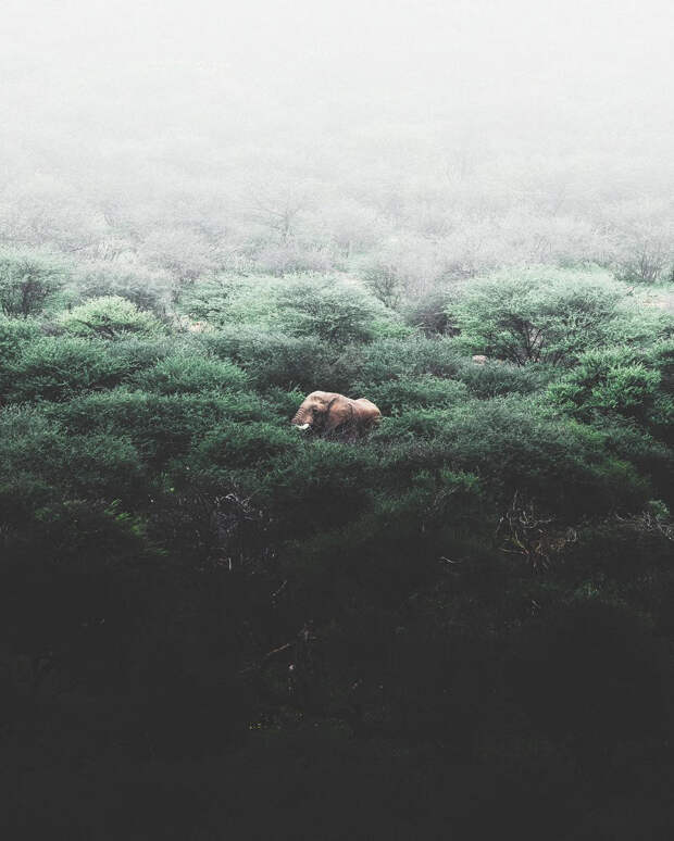 Когда дикая природа вызывает восторг. Фотограф Донал Бойд 45