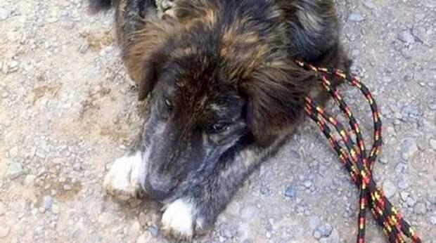 Пара подошла к заправочной станции, и в этот момент появилась собака. Она легла перед людьми, умоляя о помощи