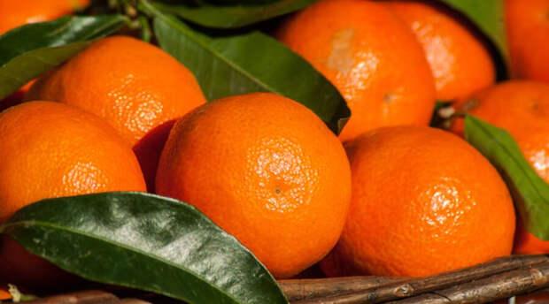С 29 октября Россия запретила ввоз выращенных в Турции мандаринов