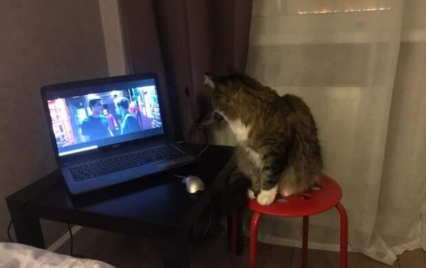Необычный кот в Петербурге любит сериалы и подглядывает за онлайн-тренировками