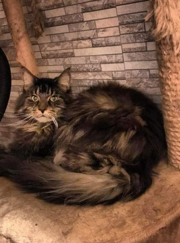 Посмотрите какой Кот ищет свой дом!!!
