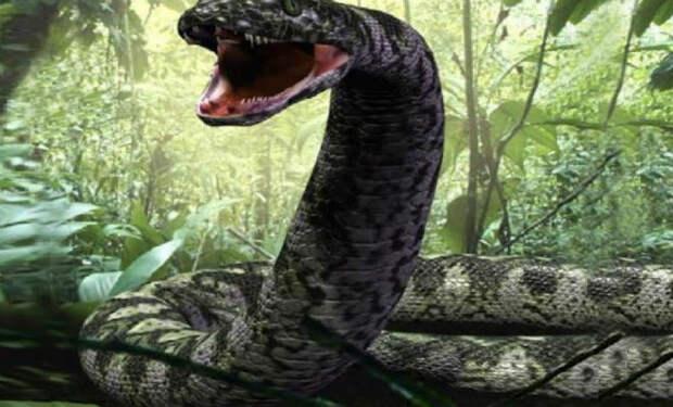Опасные обитатели мутных вод Амазонки