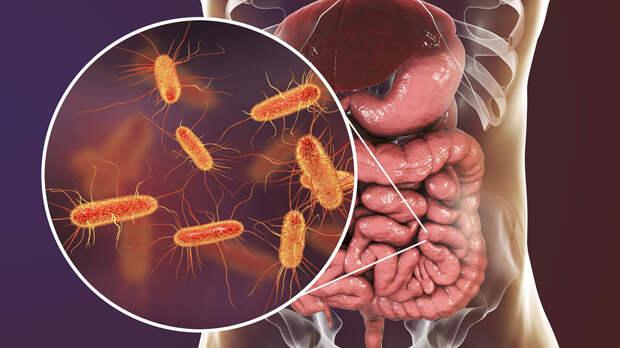 Связь между коронавирусом и состоянием кишечника раскрыл ученый