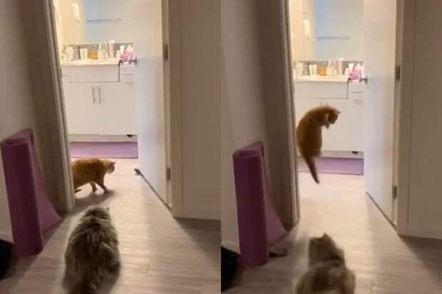 Две кошки испугались обычного носка изаставили интернет хохотать дослез