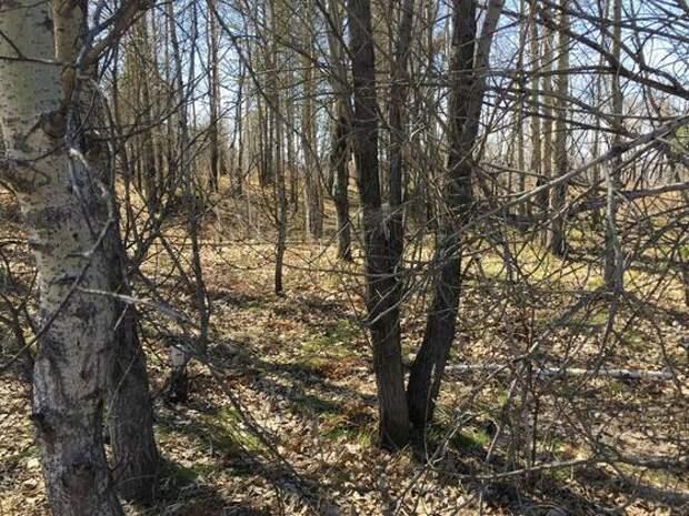 Место одного из убийств, совершенных Михаилом Попковым