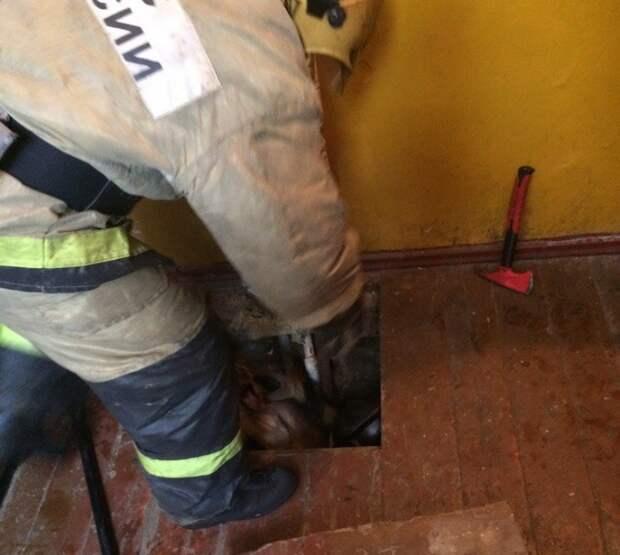 Щенок застрял в колодце, пока его не спасли пожарные… Теперь он живёт у них в депо)