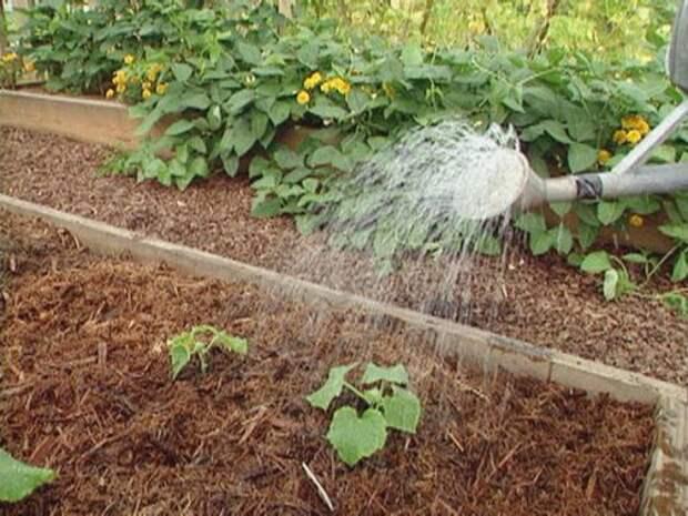 увлажнение почвы вокруг растений